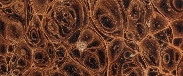 Photoshop wood textures